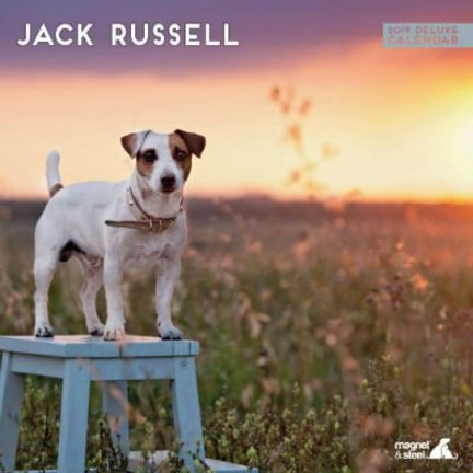 Calendriers Jack Russell Terrier
