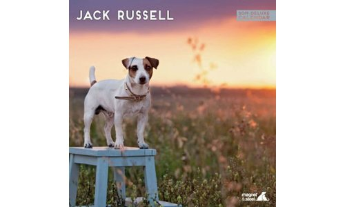 Jack Russell Terrier Kalenders 2019
