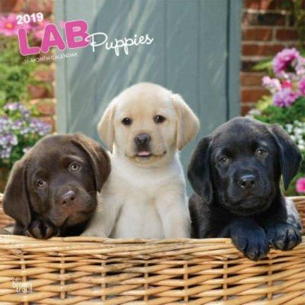 Labrador Retriever Mixed Kalenders 2019