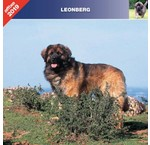 Leonberger Calendars