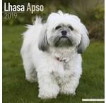 Lhasa Apso Kalenders 2019