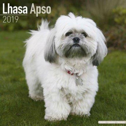 Lhasa Apso Calendars