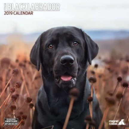 Labrador Retriever Black Calendars