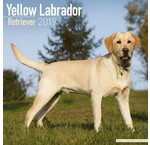Labrador Retriever Blond Kalender