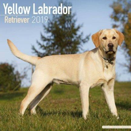 Labrador Retriever Blond Calendars