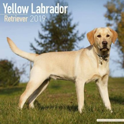 Labrador Retriever Blond Kalenders