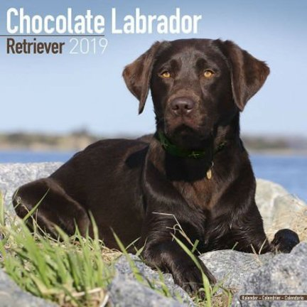 Labrador Retriever Bruin Kalenders 2019
