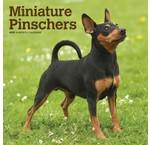Miniatuur Pinscher Kalenders 2019