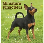 Pinscher Calendriers