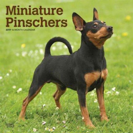 Miniatuur Pinscher Kalenders