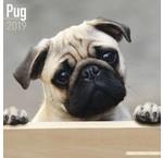 Pug Calendars
