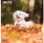 Maltezer Kalenders 2019