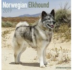Norwegian Elkhound Kalender
