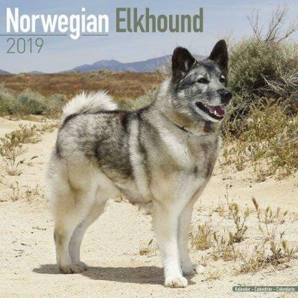 Norwegian Elkhound Kalender