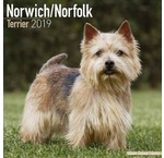 Norwich Terrier Calendriers
