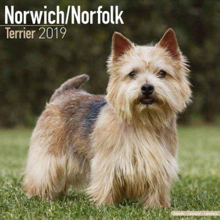 Norwich Terrier Kalenders
