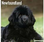 Newfoundland Calendars