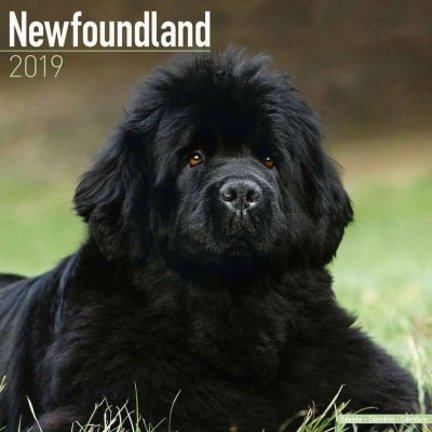 Newfoundlander Kalenders 2019