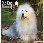 Old English Sheepdog Kalender