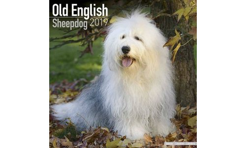 Old English Sheepdog Kalenders 2019
