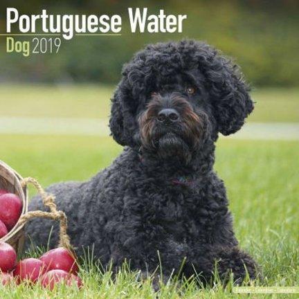 Chien d'eau portugais Calendriers