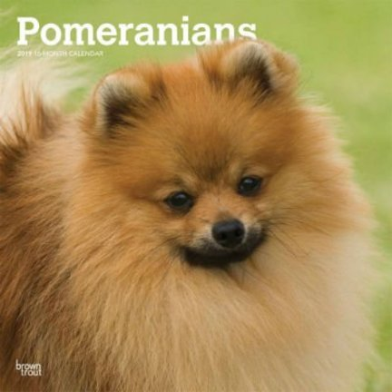 Pomeranian Calendars