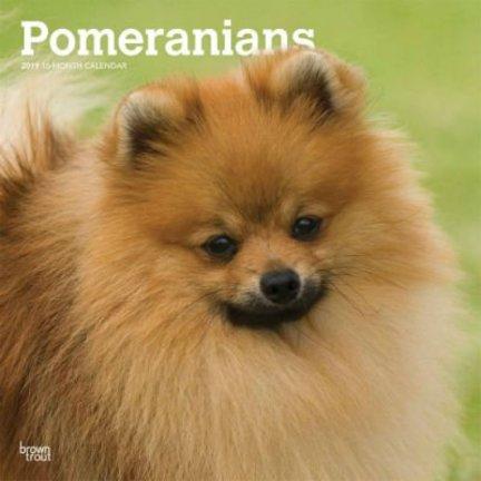 Pomeranian Kalenders