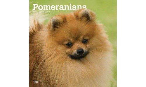 Pomeranian Kalenders 2019
