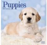 Puppies Kalenders 2019
