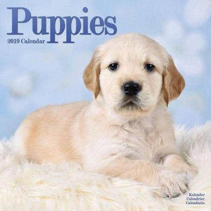 Calendriers Chiots