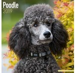 Calendriers poodle