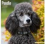 Poodle Calendars