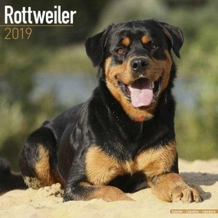 Rottweiler Calendriers