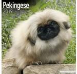 Pekingees Kalenders