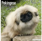 Pekingese Calendars