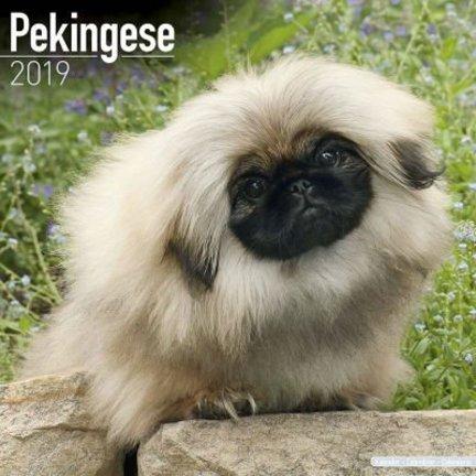 Pekingees Kalenders 2019