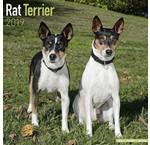 Calendriers Rat Terrier