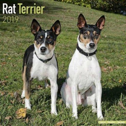 Rat Terrier Kalenders