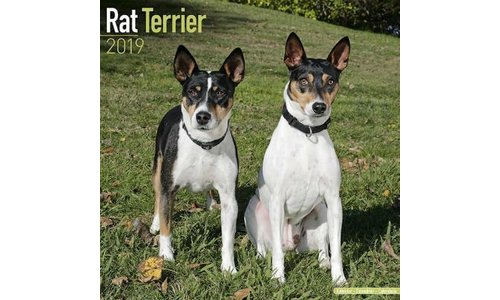 Rat Terrier Kalenders 2019