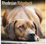 Rhodesian Ridgeback Calendriers