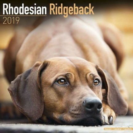 Rhodesian Ridgeback Kalenders 2019