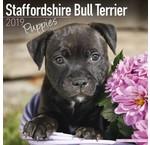 Staffordshire Bull Terrier Kalenders 2019