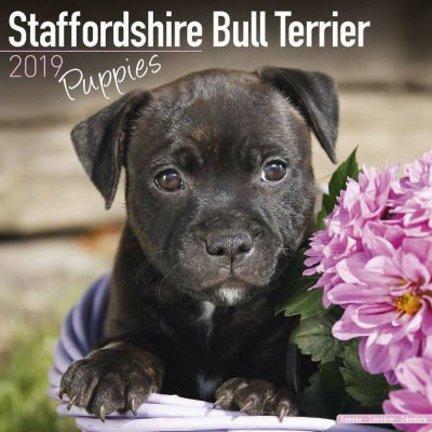 Staffordshire Bull Terrier Kalenders