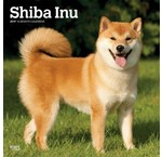Shiba Inu Kalenders 2019