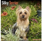Calendriers Silky Terrier