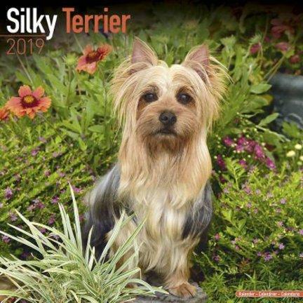 Silky Terrier Kalenders