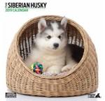 Calendriers Husky sibérien