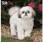 Shih Tzu Kalenders 2019
