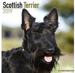 Scottish Terrier Kalender