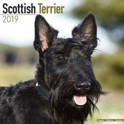 Calendriers Terrier écossais